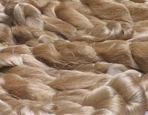 Skeins of muga silk.